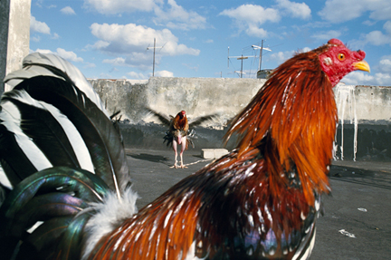 """Rebecca Norris Webb, Havana, 2008, from """"Violet Isle"""" (with Alex Webb) at the MFA, Boston, and """"Winged Desire,"""" at  NDMOA, Grand Forks, N.D."""
